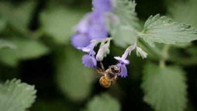 Honeybee2020