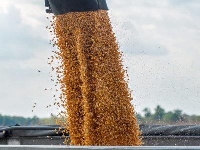 Corn auger