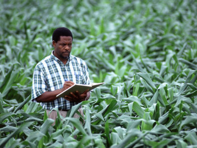 Crop scientist in a corn field