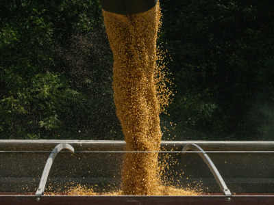 Corn harvest auger