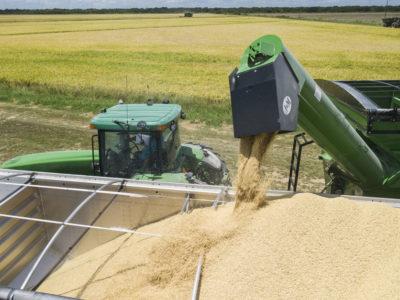 Farmer combining rice