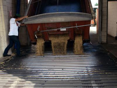 Rice unloading