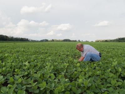 soybeans and farmer