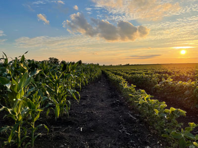 Corn and Soybean Field 836x627 compressed