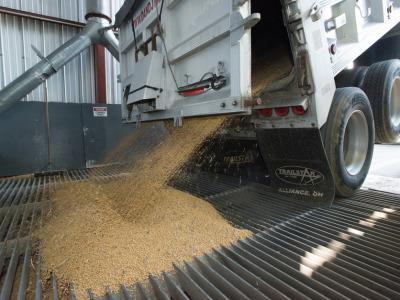 Soybean_unloading