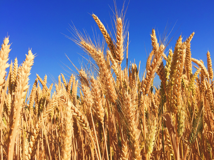 russian grain boom pushes exports into us sales territory 2018 03