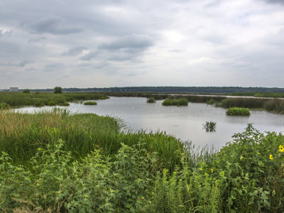 Marshland_environment_wildlife_habitat