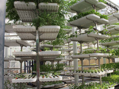 Vertical farming