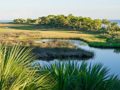 wetlands_habitat_nature_wildlife