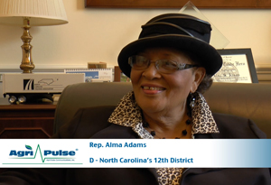 Feature: While North Carolina Democrat Alma Adams may be known for her extensive hat collection -- she says she owns over 1,000 -- she is quick to say that she's in Washington to use what's in her head, not show off what's on it.