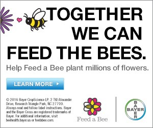 Together we can feed the Bees