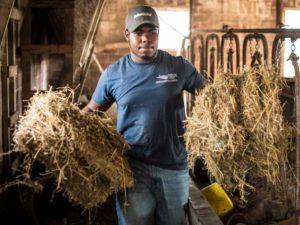 black_farmer_chores_hay.jpg