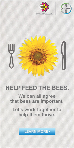 Help Feed the Bees