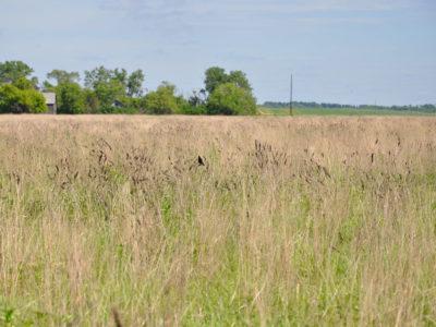 CRP grassland