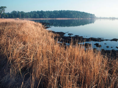 Conservation wetland