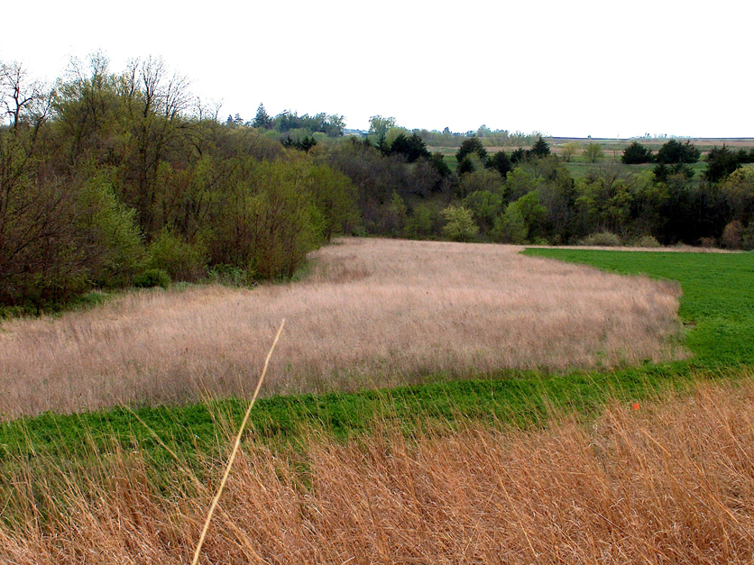 CRP Buffer Strip