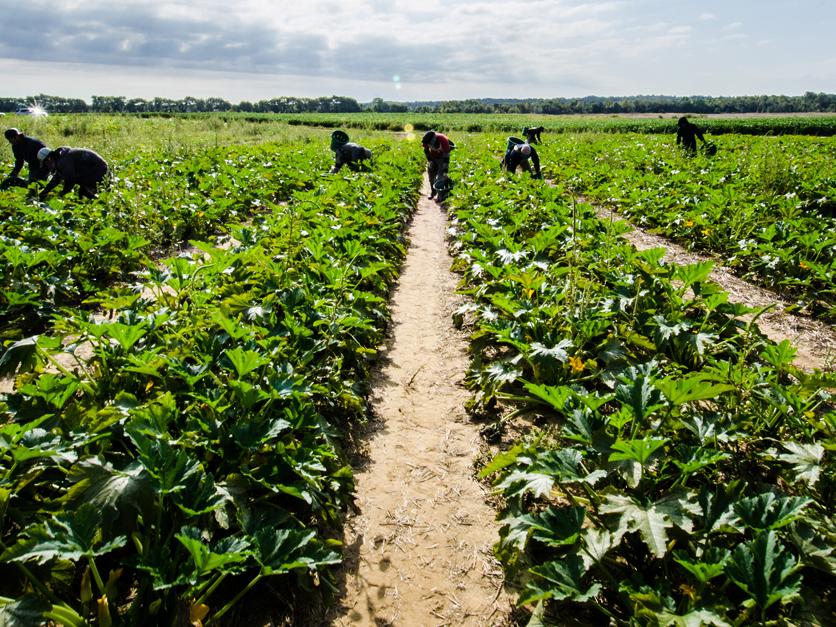 Farm_labor_vegetables