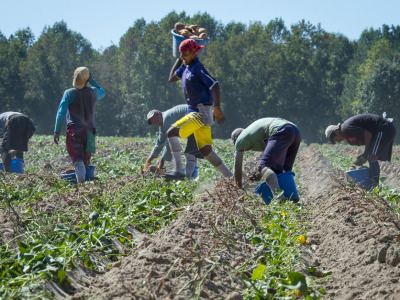 Farm labor immigration