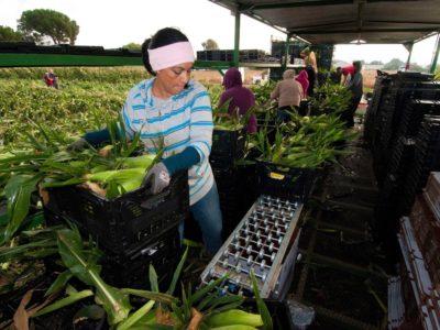 Farmworker-USDA photo