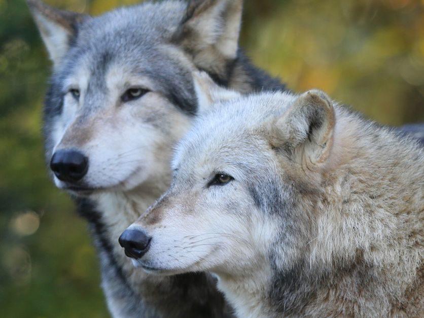 Wolf, marijuana policy headline state ballot initiatives