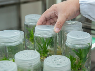 Plant biotechnology research