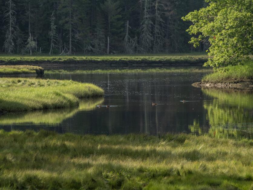Stream wetland wotus 2
