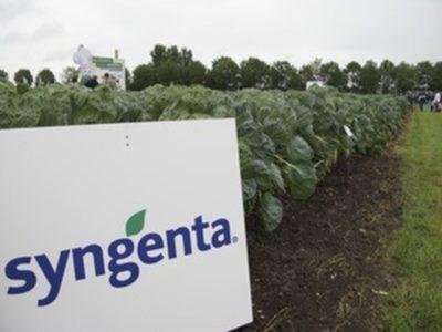 Syngenta field