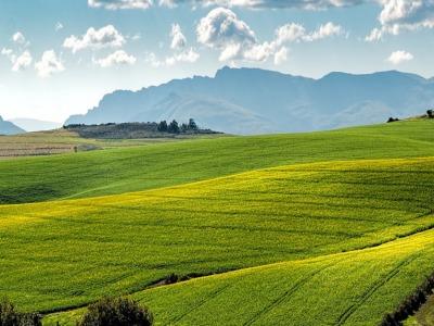 Farmland-836