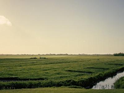 Wetlands-836