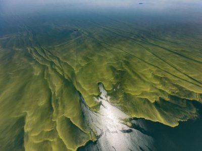 Lake Erie HABs