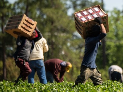 Farmworkers usda flickr